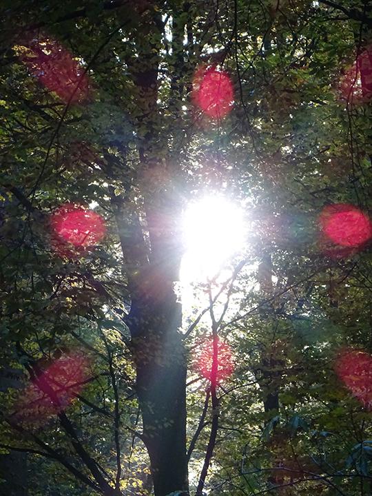 Mystisches rotes Waldkreuz