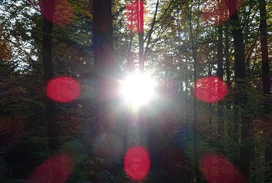 Wald Sonne Rotes 4-Punkte Kreuz