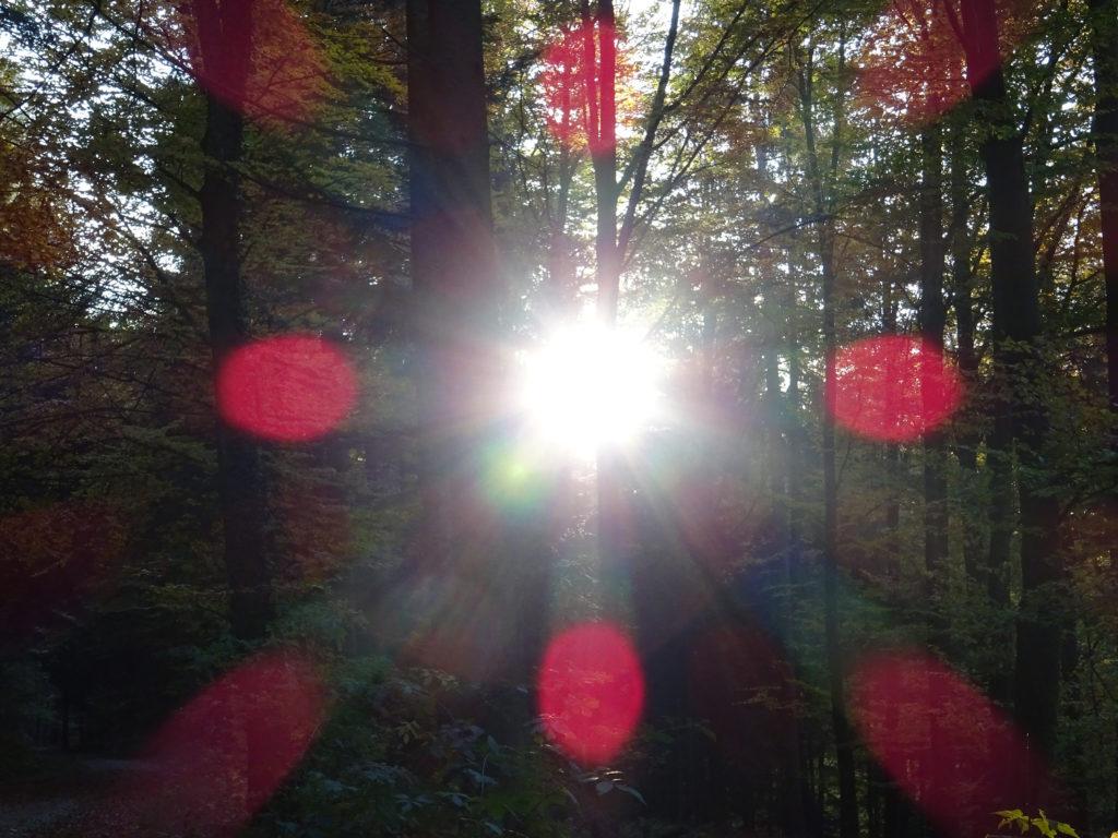 DARSHAN mit GOTT: Wald mit Sonnenstrahlen und mystischem roten Kreuz, Desktopbild